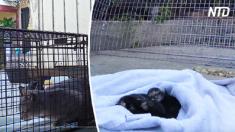 Gata está dá à luz em local precário e com lixo e precisa de ajuda para sobreviver com seus filhotes
