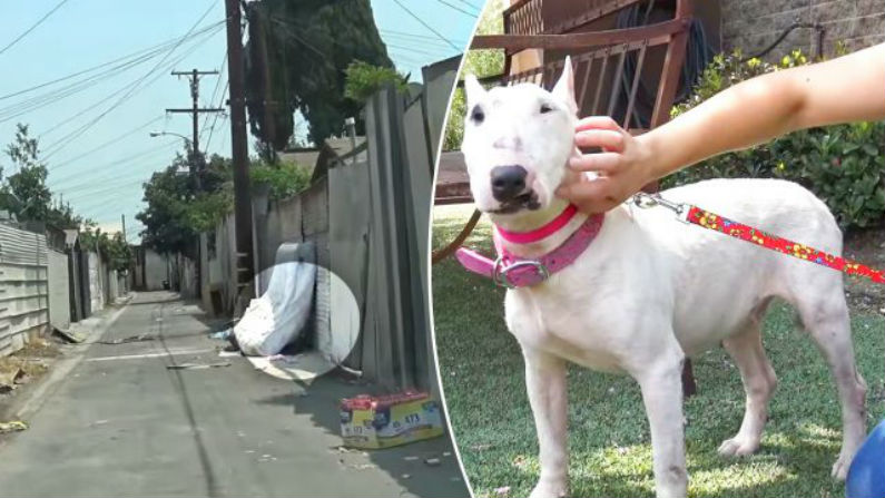Cães estavam abandonados, feridos e maltratados até que um resgate espetacular mudou suas vidas