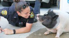 Porco foge de casa e acaba se apaixonando por uma policial