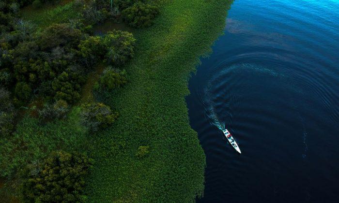 Projeto cria política nacional de proteção da Amazônia