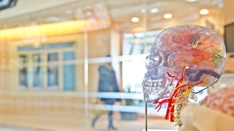Demência é revertida em ratos e testes em humanos já possuem data marcada