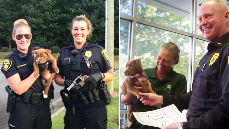 Filhote de pit bull ajuda Departamento de Polícia de NC desenterrando uma pistola totalmente carregada