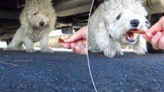 Hope For Paws demonstra sua maestria em mais um resgate de cão em Los Angeles