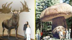 Maravilhas gigantes! Os 10 maiores seres vivos que existiram no planeta Terra