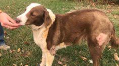"""Encenação: falso cão """"grelhado"""" da PETA em manobra publicitária pró-veganismo"""