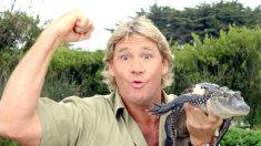 "Grupo de direitos animais é criticado por acusar Steve Irwin de ""assediar"" arraia que o matou"