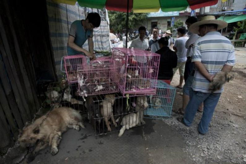 Clientes chineses compram cães para venda no mercado de Yulin, na província de Guangxi, no sul da China, em 21 de junho de 2015 (STR/AFP/Getty Images)