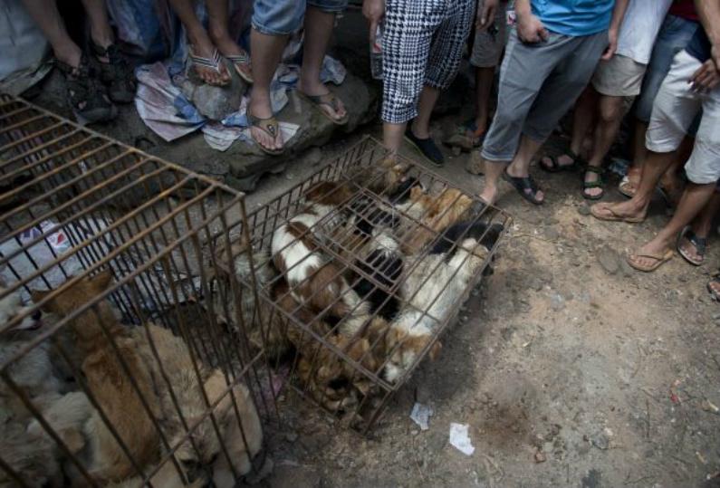 Clientes chineses se reúnem em torno de cachorros à venda em um mercado em Yulin, província de Guangxi, no sul da China, em 21 de junho de 2015 (STR/AFP/Getty Images)