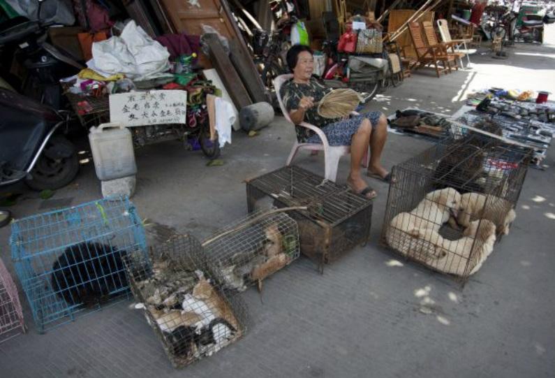 Foto tirada em 17 de junho de 2015 mostra uma mulher vendendo cães e gatos em uma rua em Yulin, na província de Guangxi, no sul da China. (STR/AFP/Getty Images)