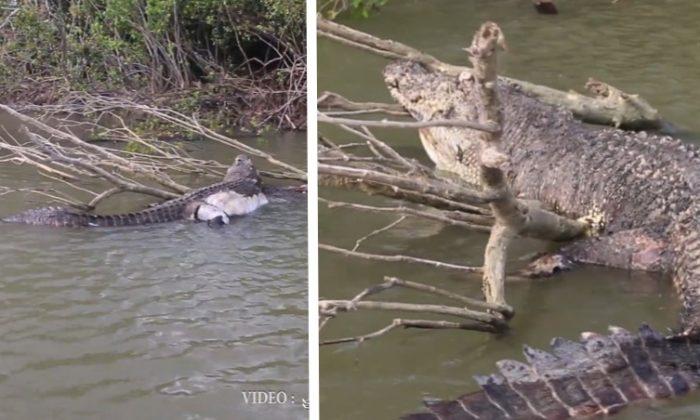 Polícia investiga morte de icônico crocodilo enquanto cidade australiana chora sua perda