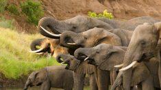 Caçador que matou cinco mil elefantes não se arrepende