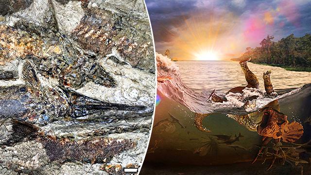 Cientistas descobrem fósseis do dia da extinção dos dinossauros