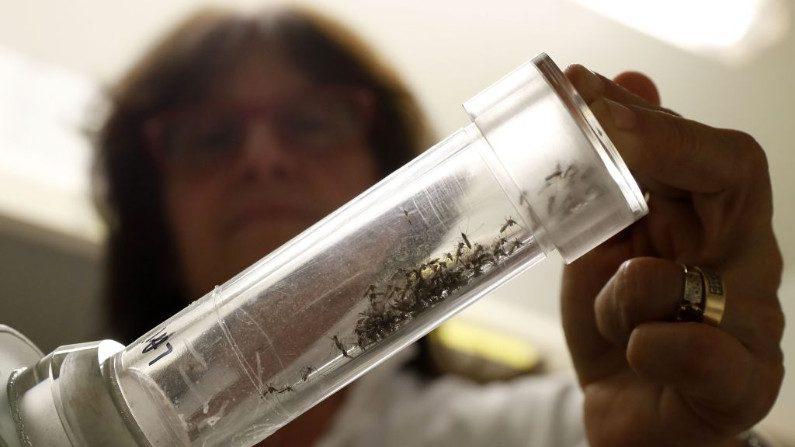 Venezuela tem epidemia de malária e teme-se que se espalhe para outros países