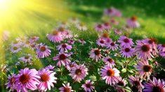 O poder curativo das plantas