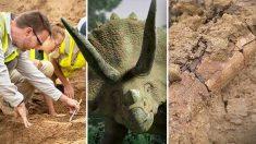 Cientistas desenterram enorme esqueleto de triceratops adulto de 68 milhões de anos