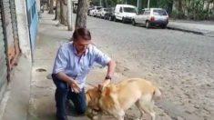 """Bolsonaro deve criar """"Secretaria de Animais"""" em agosto"""