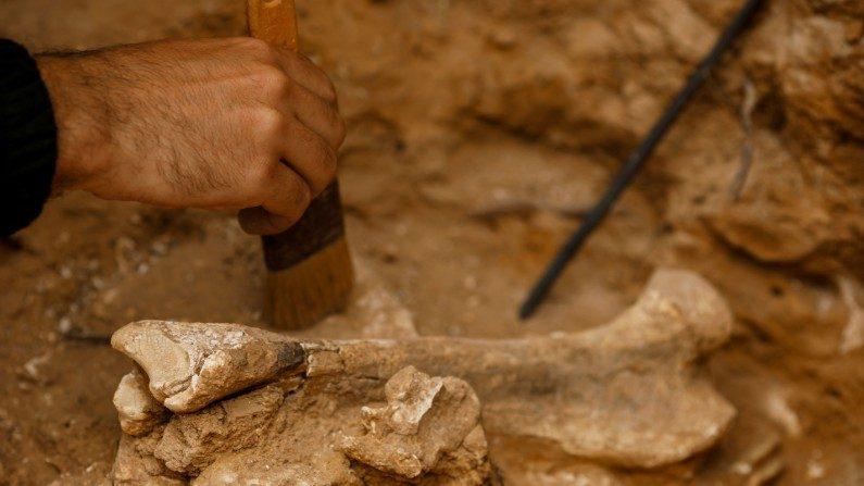 Descobertos fósseis humanos de 1,8 milhão de anos na Indonésia