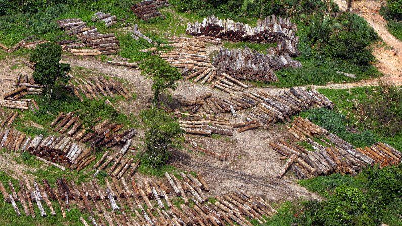 Comissão quer convocar Salles para falar sobre ações no Pantanal