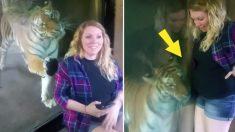 Grávida tira selfie com tigre, mas sua reação é incrível!