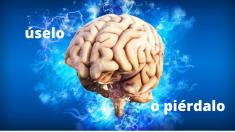 Regeneração cerebral: por que ela é real e como torná-la possível