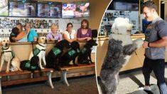 Primeira e única 'Cervejaria de Cachorros' oferece cães sem teto para adoção quando alguém apita