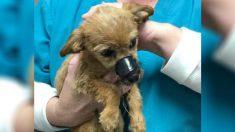 Filhote de cachorro jogado de uma ponte com focinho selado 'agradece' seu salvador por resgatá-lo