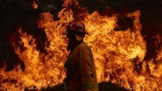 Estima-se que 1 bilhão de animais tenham morrido nos incêndios florestais na Austrália segundo especialistas