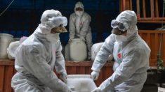 Especialistas alertam sobre casos de coronavírus na Coreia do Norte