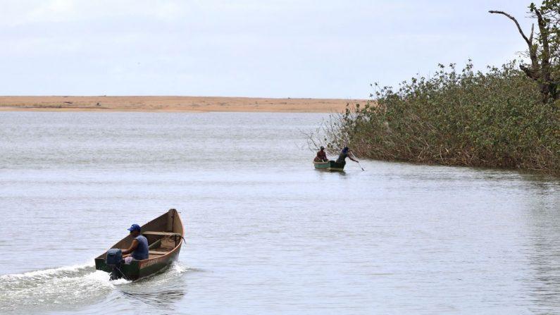 Cinco anos depois, pesquisadores encontram metais tóxicos em peixes do Rio Doce