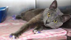 Gato é encontrado com as patas pintadas e gera suspeita de que ele seria usado em rinhas ilegais de cães