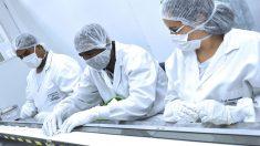 UFMG e Fiocruz desenvolvem teste mais preciso e barato para covid-19