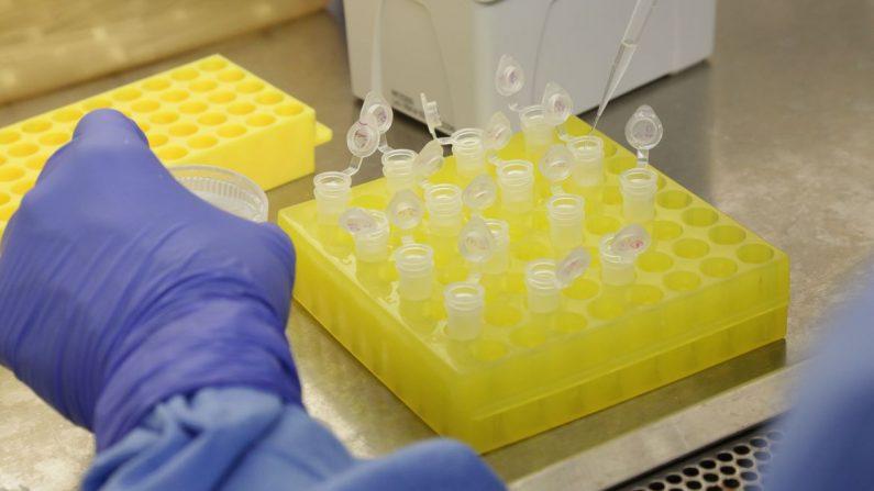 Maioria dos testes rápidos de coronavírus 'doados' pela China a tchecos estão com defeito