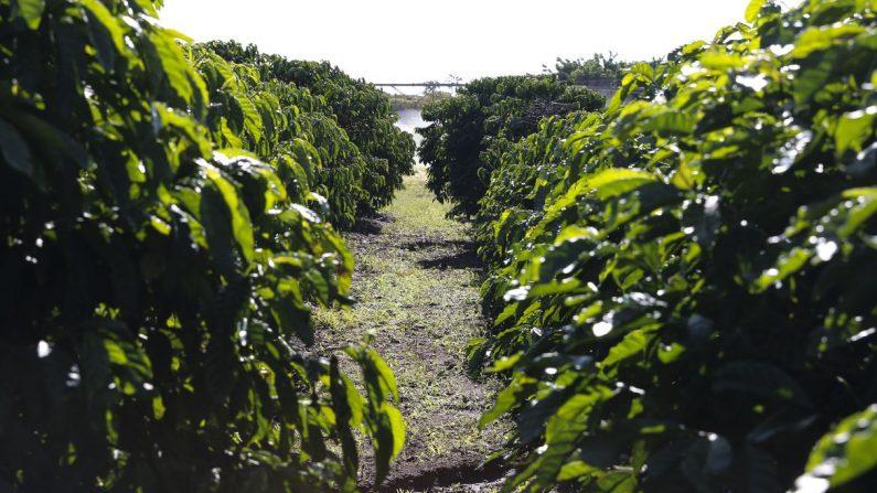 Governo e agricultores garantem produção de alimentos durante pandemia
