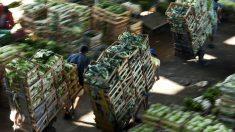 Brasil, UE e mais 20 países se comprometem com abastecimento alimentar