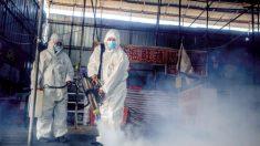 Exposição a outros vírus aumenta imunidade à Covid-19 na Ásia, diz estudo