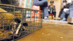 Narrativa oficial da China sobre o mercado úmido de Wuhan é contrariada por documento vazado
