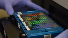 Pequim cria banco de dados de DNA em larga escala violando direitos humanos, afirmam especialistas australianos