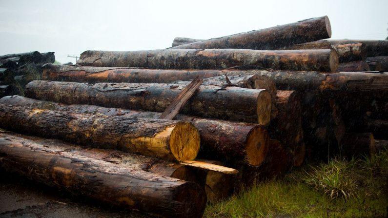 Polícias do Amazonas realizam operação contra desmatamento ilegal