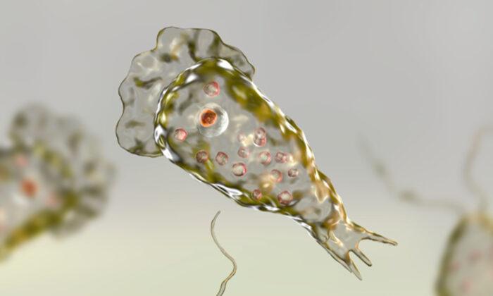 Rara ameba devoradora de cérebros infecta pessoa na Flórida e leva autoridades de saúde a emitir aviso