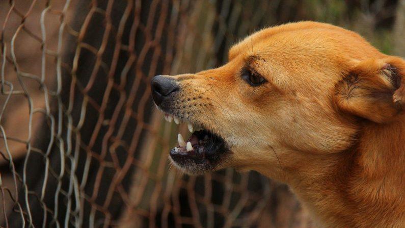 Garoto salva sua irmã mais nova do ataque de um cachorro e fica com o rosto quase desfigurado
