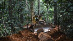 Extração ilegal de madeira que incentiva China e ameaça florestas da África