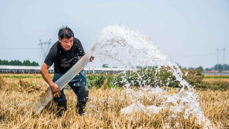 Dados oficiais sobre reservas alimentares da China questionados