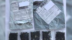 Moradores de vários estados dos EUA recebem misteriosos pacotes de sementes da China