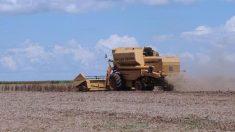 Plataforma receberá denúncias de venda casada no crédito agrícola
