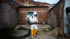 Infecção por zika pode aumentar risco de dengue mais grave