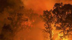 Trump visita Califórnia e pede melhora em gestão de incêndios florestais