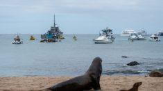 Navios chineses 'saquearam' lulas de Galápagos, representando 99% da atividade pesqueira: aponta estudo