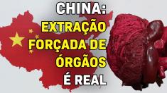 China: Extração forçada de órgãos é real