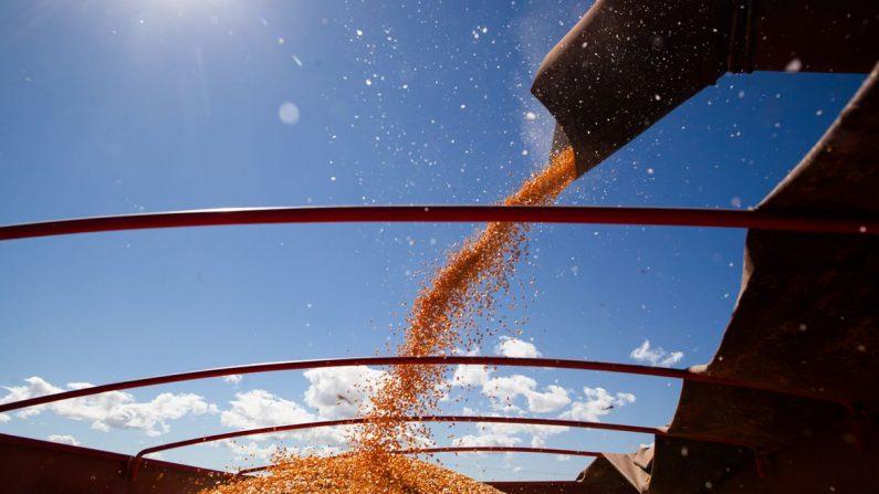 Economia Balança comercial do agronegócio soma US$ 100,81 bilhões em 2020