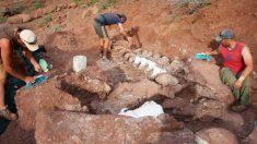 Paleontólogos descobrem fósseis de dinossauros que podem ser da maior criatura já conhecida